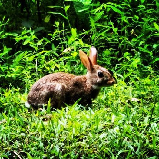 1.bunny1.jpg