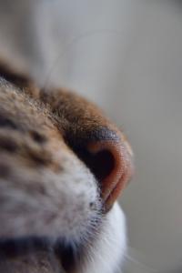 cat-nose-marco.jpg