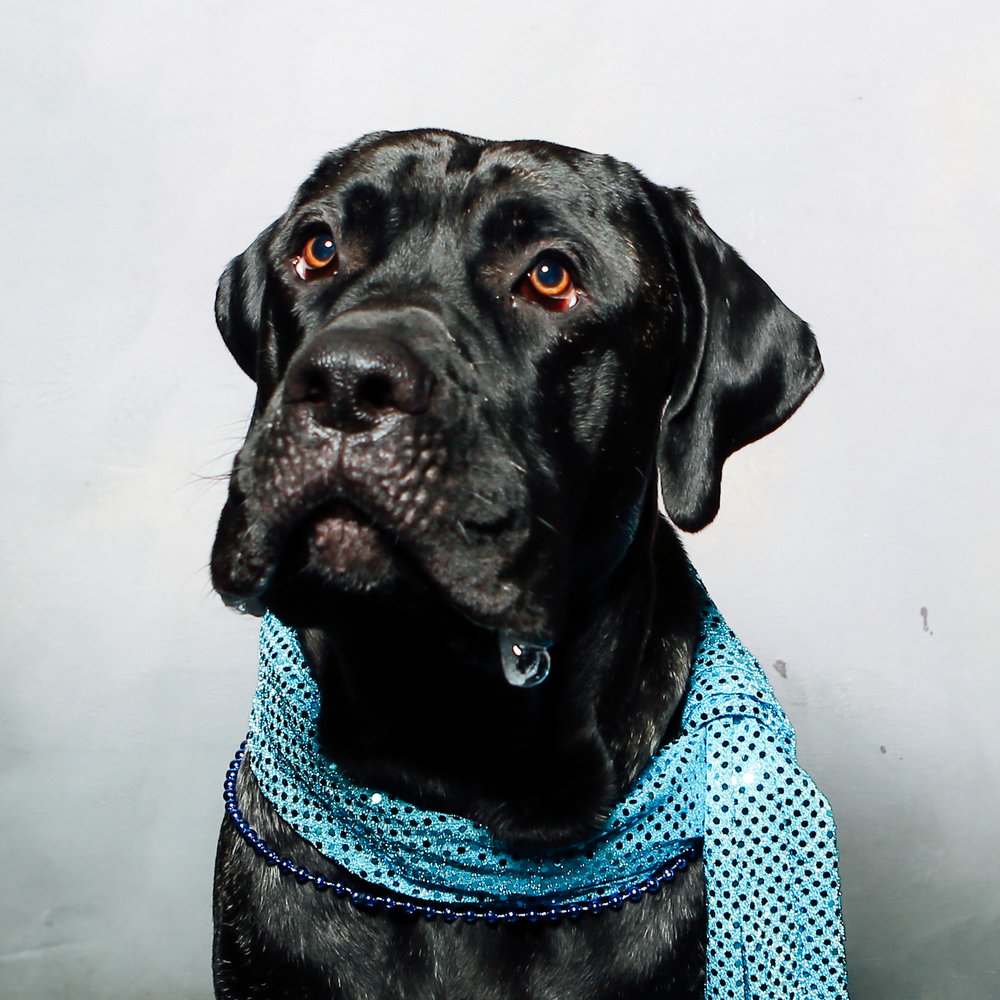 Jake is a silly dog, who likes walks with Cameron and Rayla, as well as sitting in your lap, despite weighing 115 lbs. He will definitely get drool on your pants.
