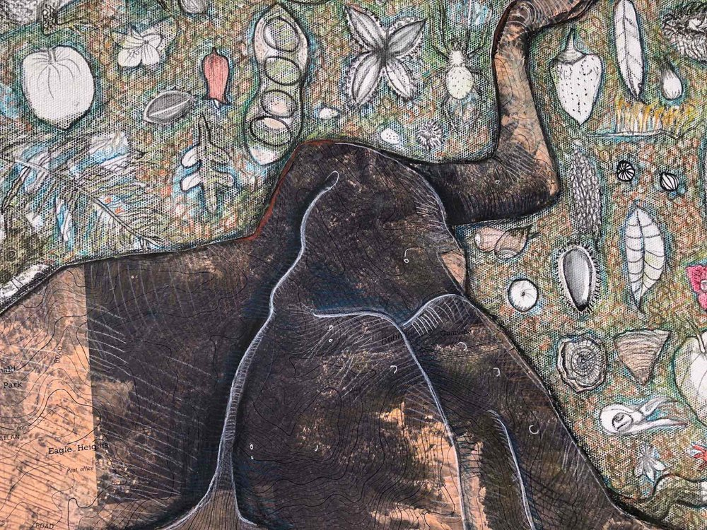 detail from 'seeing the forest for the trees' NB buttress figs and other rainforest trees drawn over maps of local national parks on Tamborine Mountain