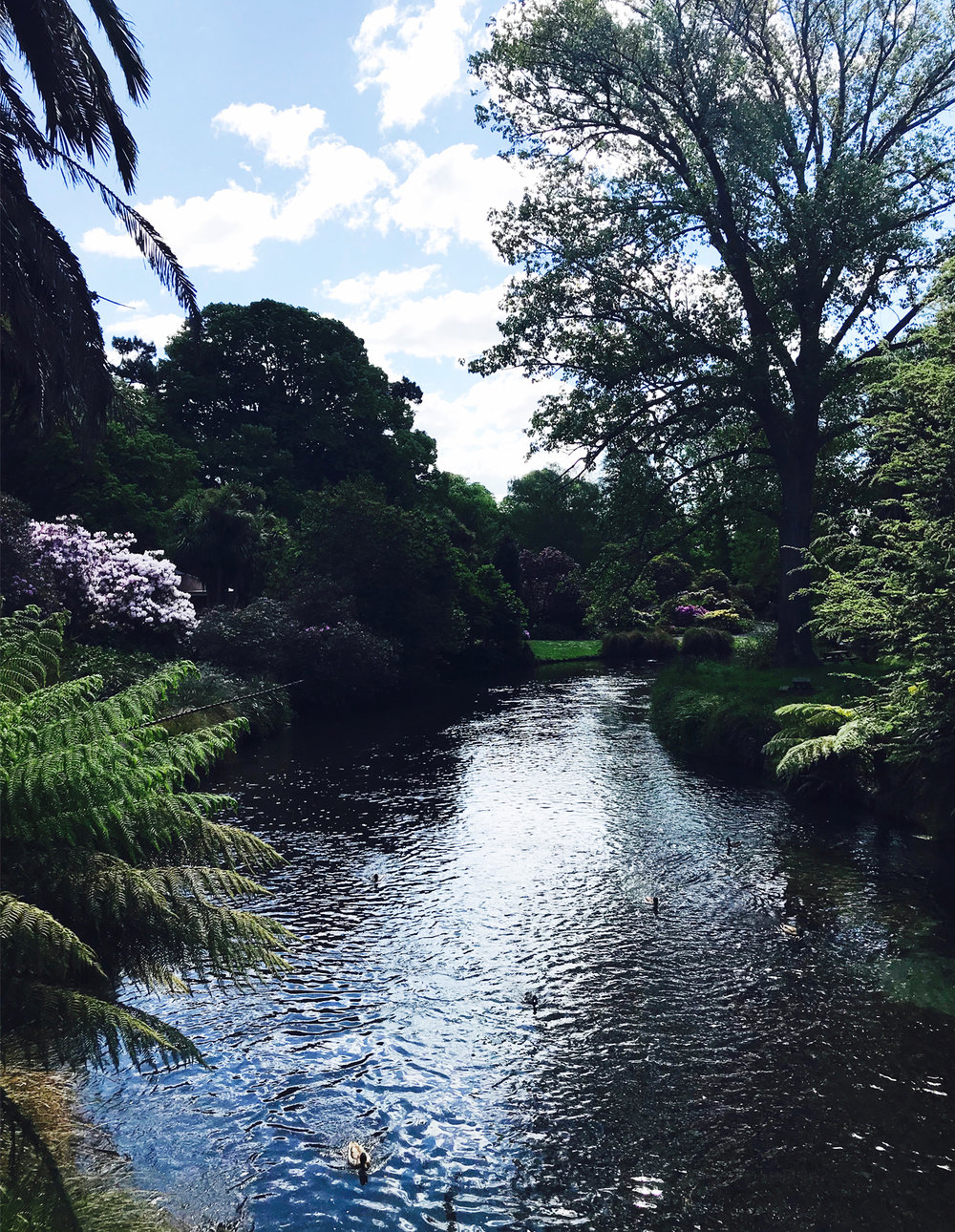 botanic2.jpg