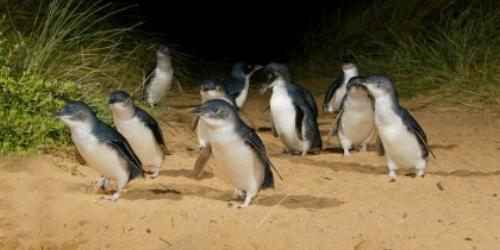 Penguin-2-420x240.jpg