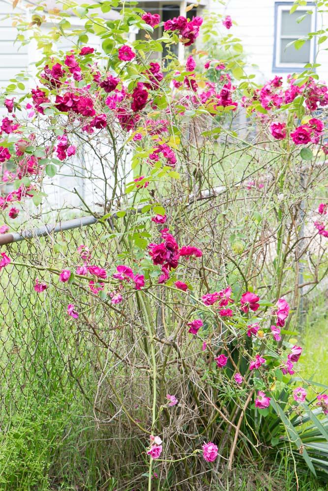 Oregon-Hill-gardens-3691-9.jpg