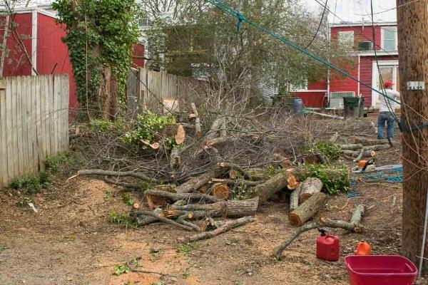 Finding a recently-felled oak tree.