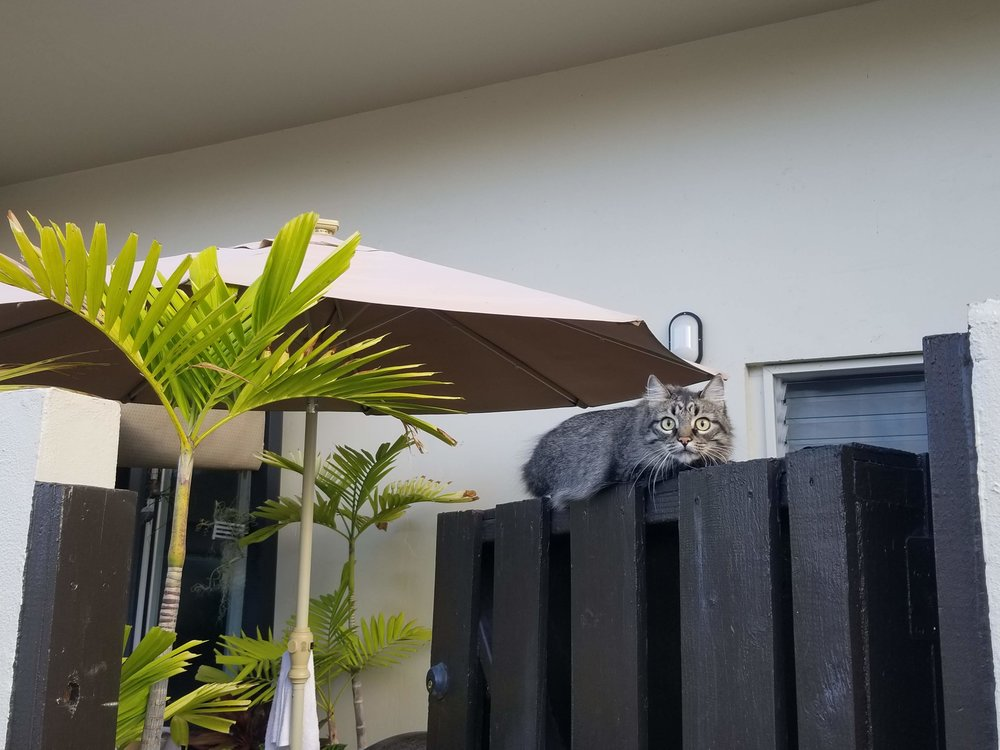 This cat is judging me and finding me…. wanting.