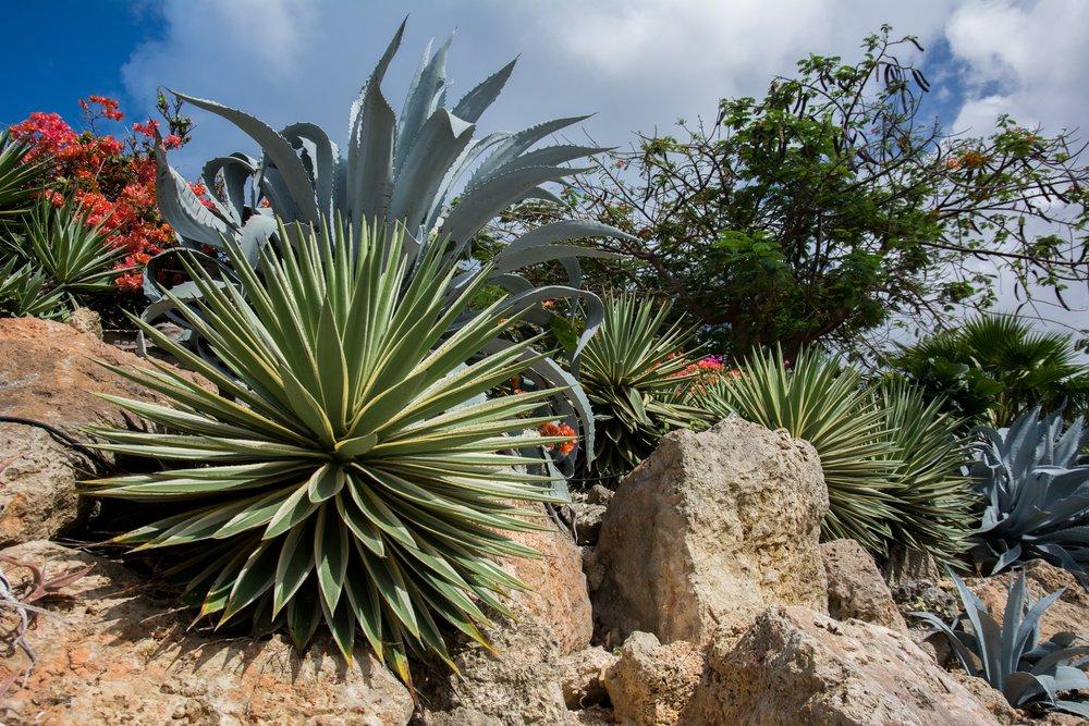 agave-desert-nature-2616.jpg