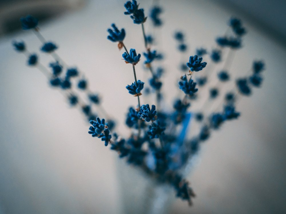 blossom-blue-flowers-blurred-background-1313345.jpg