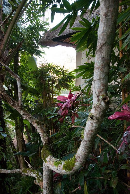 flora Ubud Hanging Gardens bali