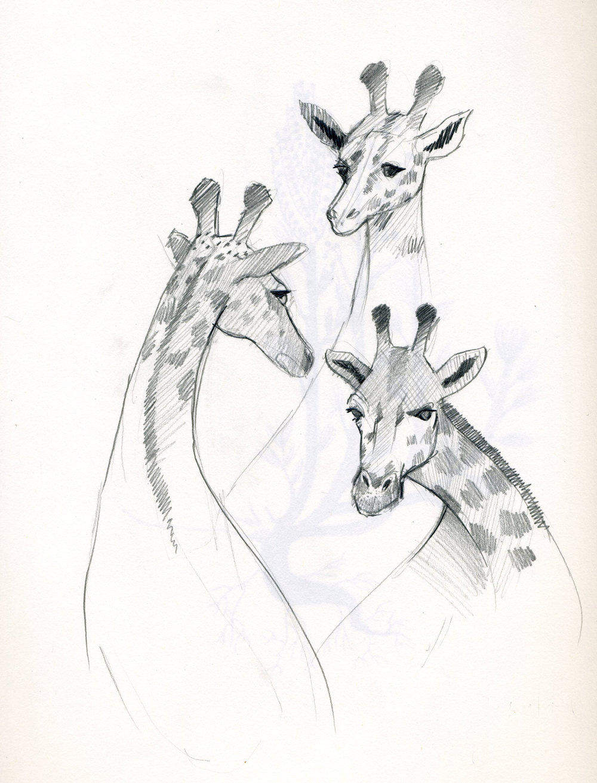 giraffe_sketches.jpg