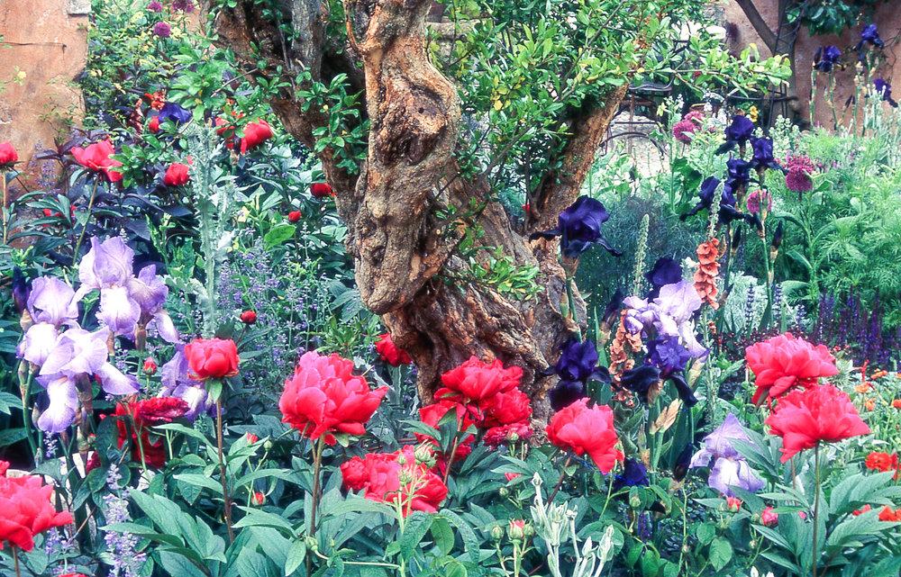 RHS Chelsea Flower Show Gold Medal