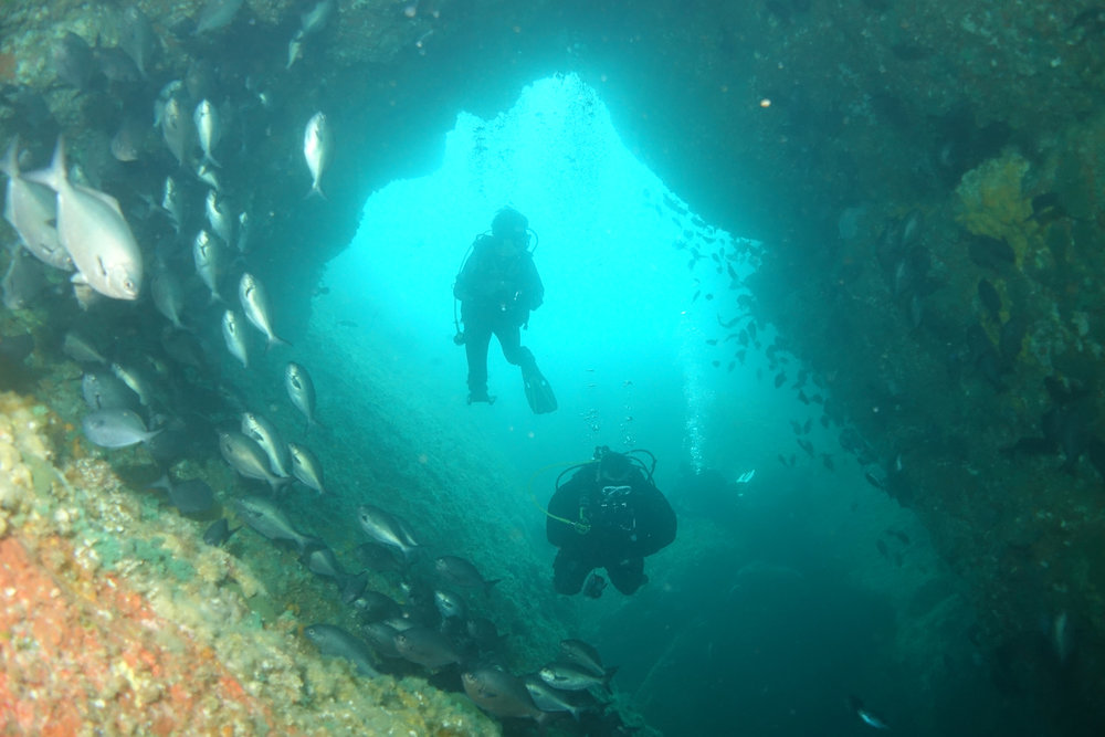 NEW_0002_diving.jpg