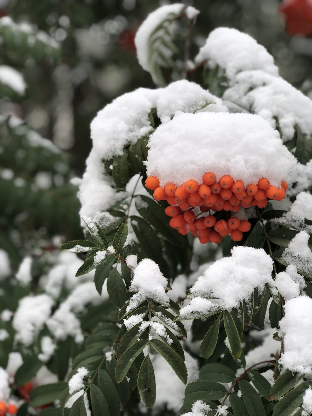 First snow on September 13, 2018 in Edmonton (photo by:    @thelotuspage   )