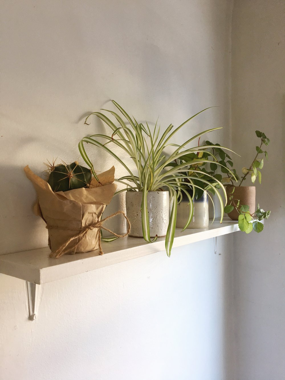 house plants | indoor plants | keeping house plants alive | Canadian lifestyle blogger | freelance writer | post grad | The States of Georgia blog | writing and lifestyle blog