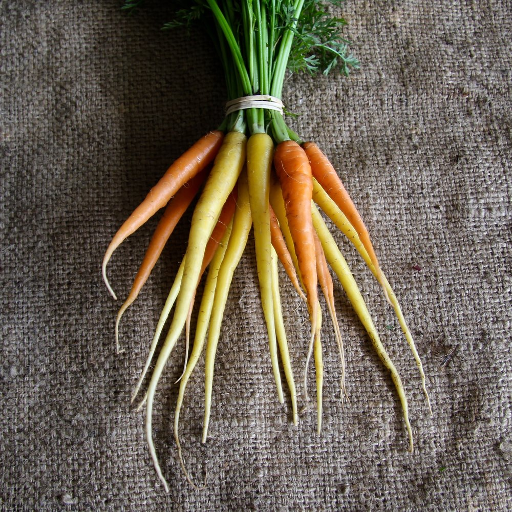 Multicoloured Carrots .jpg