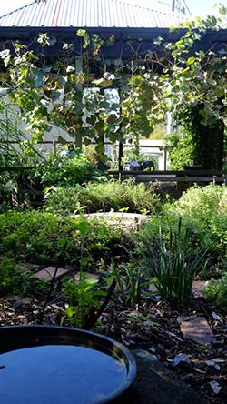 Kariong Eco Garden, Kariong, NSW