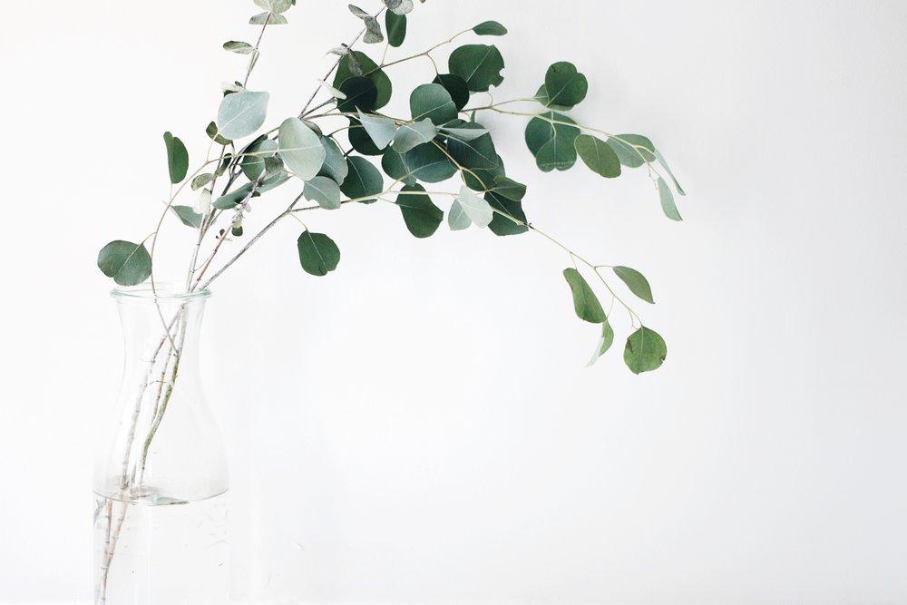 fresh eucalyptus branches larolf natural easy cut fresh flowers online