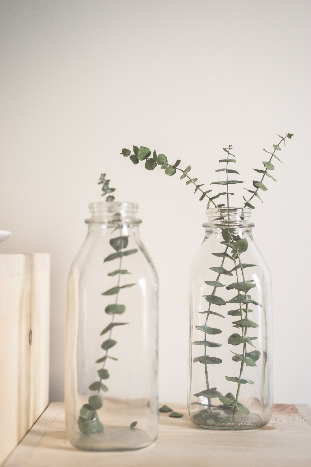 LaRolf dried eucalyptus branches for sale online