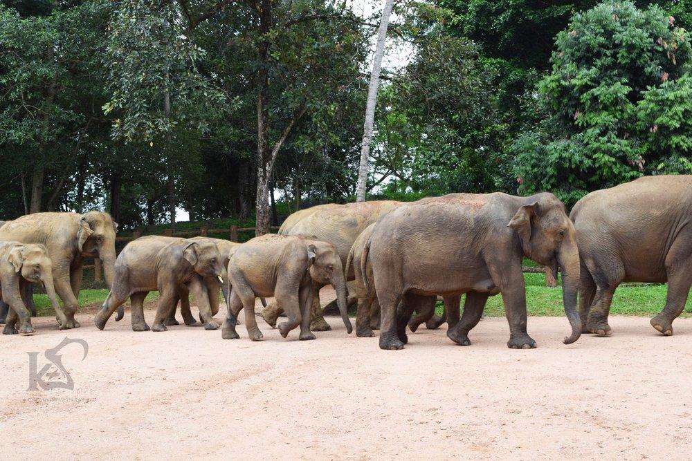 The Elephant I rode