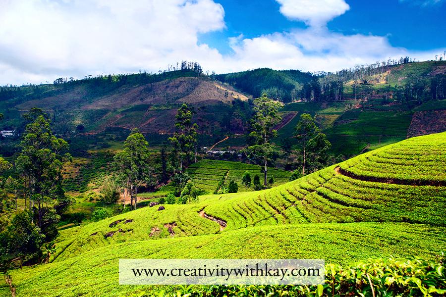 qatar-travel-blogger-khansa-tea-plantation-nuwara-eliya-srilanka