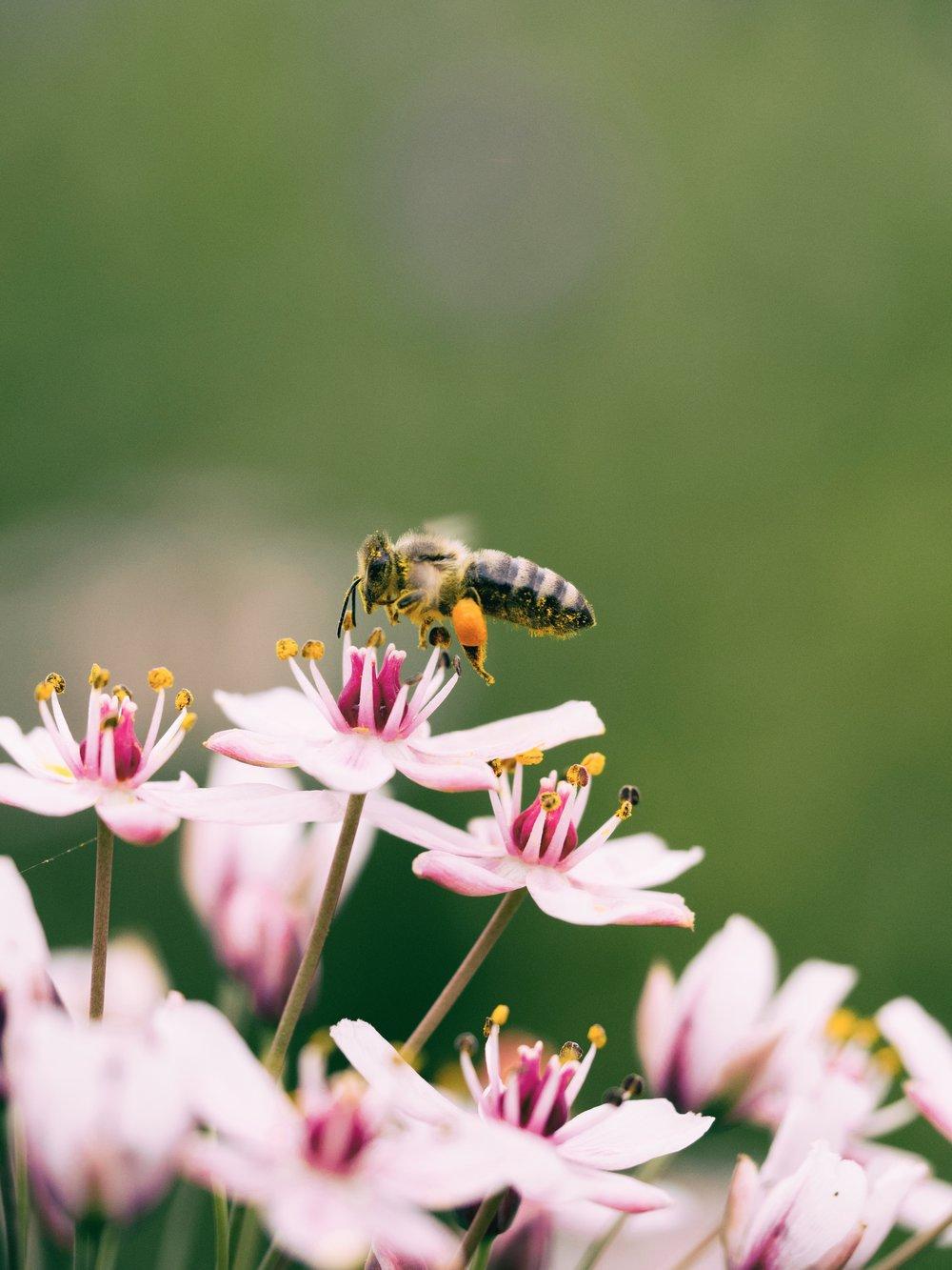 honey-bee-hardworking.jpg