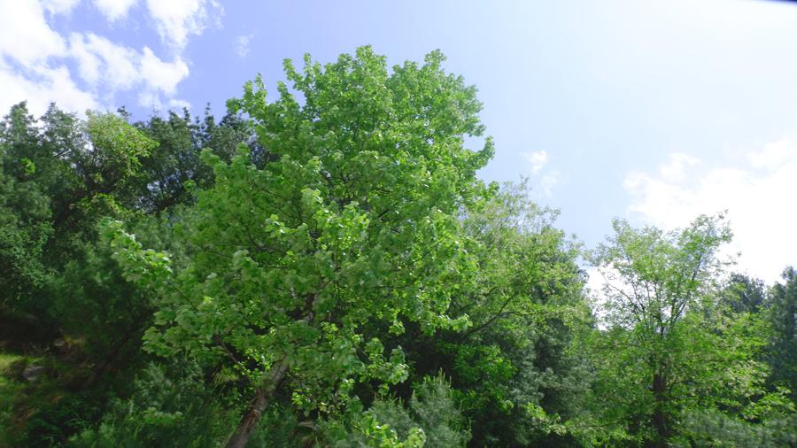 manali-greenery.jpg