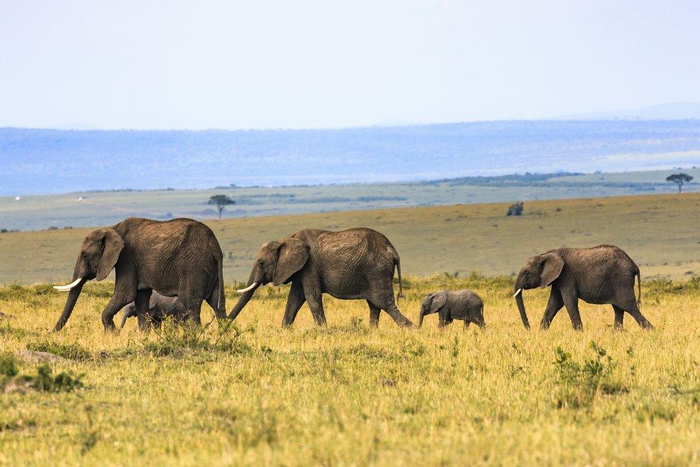 srilanka_elephants.jpg