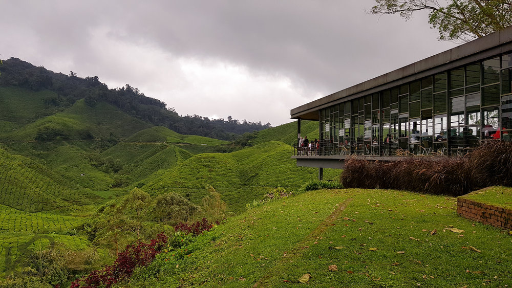 cameronhighlands-malaysia-qatarblogger-bohpalaistea-1-of-1.jpg