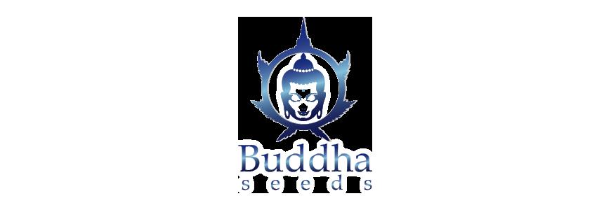 buddha-seeds-growshop-growmart1.png
