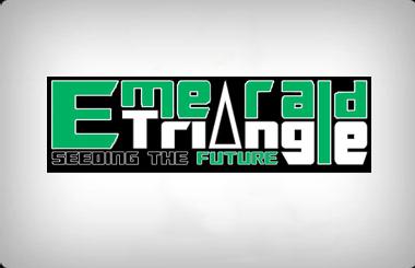emerald-triangle-seeds-feminized-1506441865.jpg