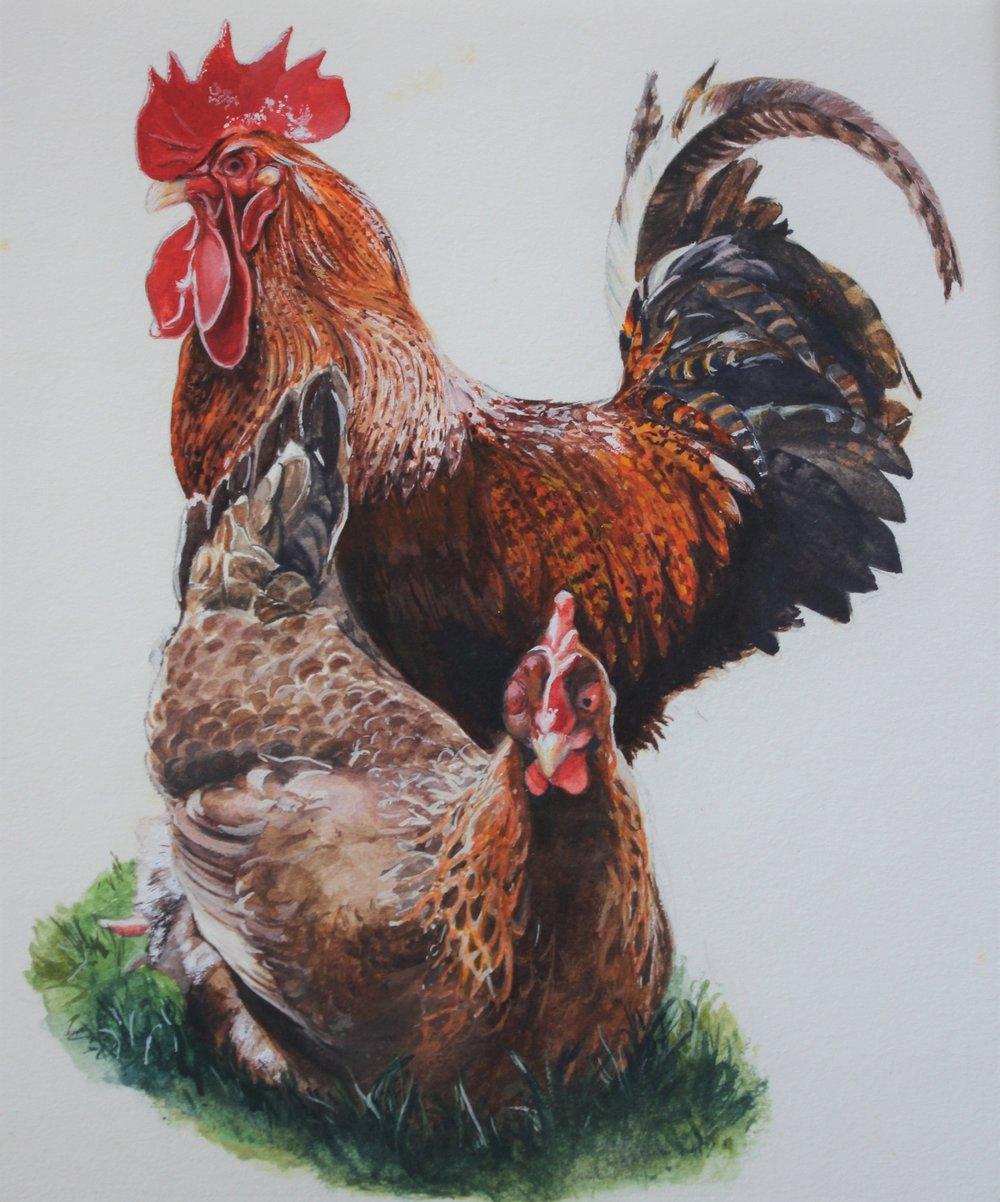 Cockrell & Hen