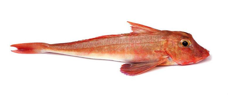 RED GURNARD    Format:  Fresh   Size Grade:  0-200g   200-500g   500g+