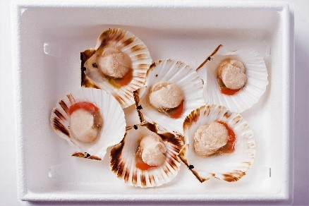 KING SCALLOP HALF SHELL (Roe On)    Net Weight:  Fresh - 3kg   Frozen - 8kg   Format:  Fresh/ Frozen   Notes:  Fresh scallops are packed in polystyrene boxes