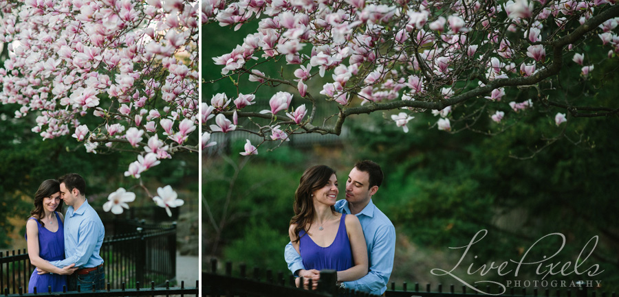 """high park engagement, magnolia in bloom"""