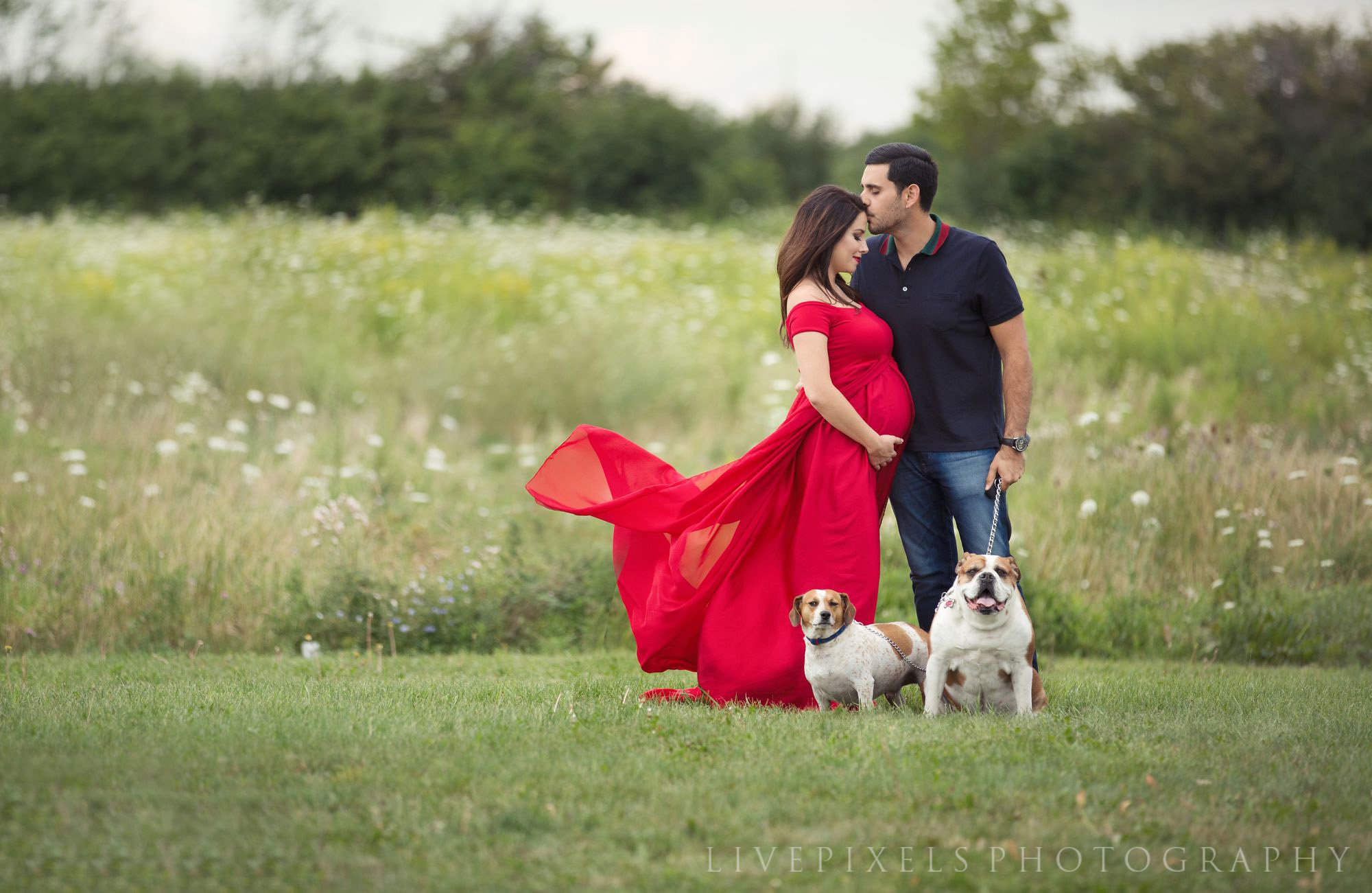 Maternity Portraits with couple and their dogs - Livepixels Photography, Toronto / livepixelsphotography.com