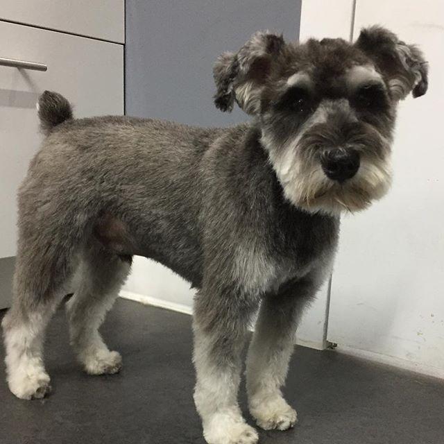 Fresh haircut !  #doggiestylesbk
