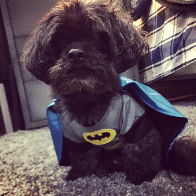 The next Batman ! #doggiestylesbk #spaday #batmanforever #halloweencostume