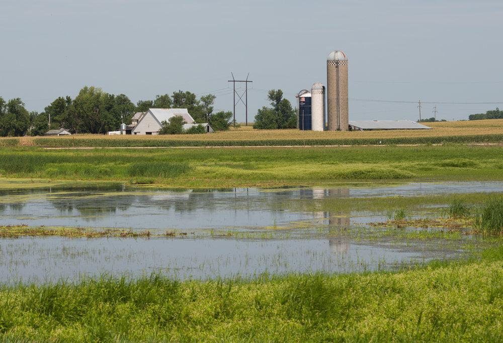 Wetland-4249.jpg