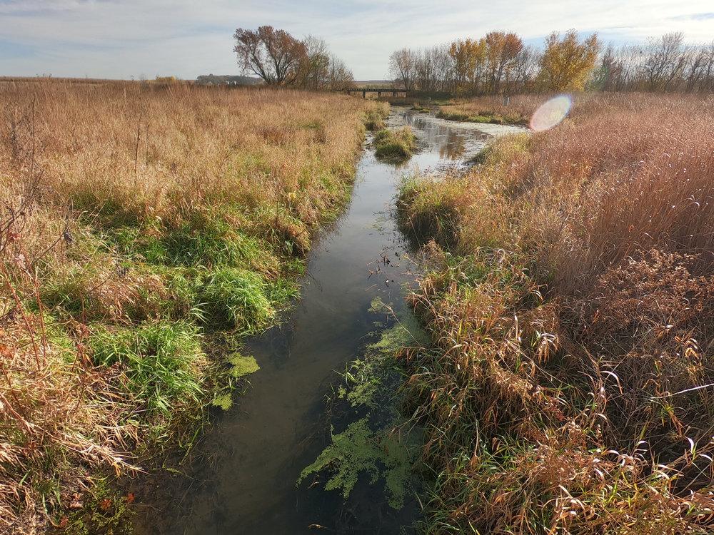 Wetland-2373.jpg