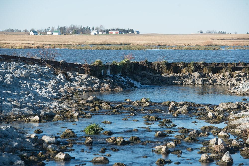 Wetland-3-2.jpg