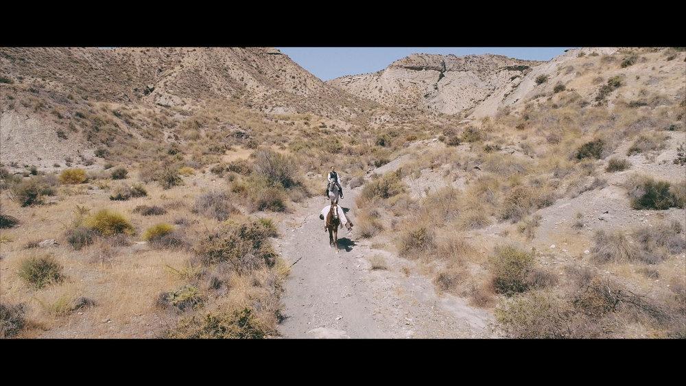 Horses_07.jpg