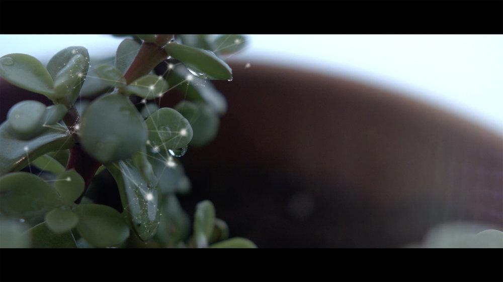 Plant Sparkle.jpg