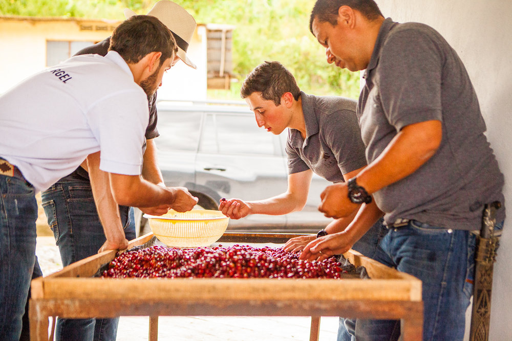 OUR FAMILY'S MISSION - Our passion from day one has been to provide coffee roasters with the very best single origin specialty Colombian coffee. It takes a team — a familia — that is dedicated to their craft and their community in order to achieve this.