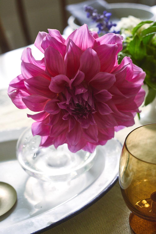Seasonal flowers, everywhere