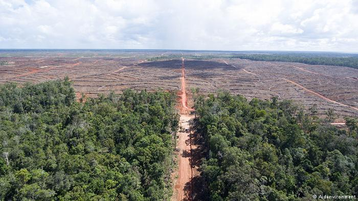 Global hunger for palm oil has led to deforestation and loss of biodiversity around the world