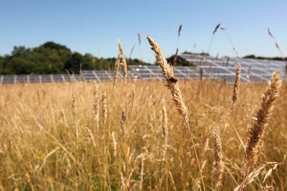 Eden Renewables Pollinator-Friendly Solar Farms 8.jpg