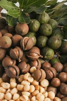 Macadamia2.jpg
