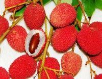 brewster-lychee.jpg
