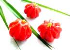 surinam cherry 4A.jpg