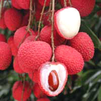 lychee (3).jpg