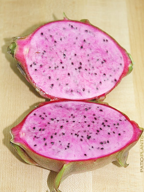 pink-dragon-fruit.jpg